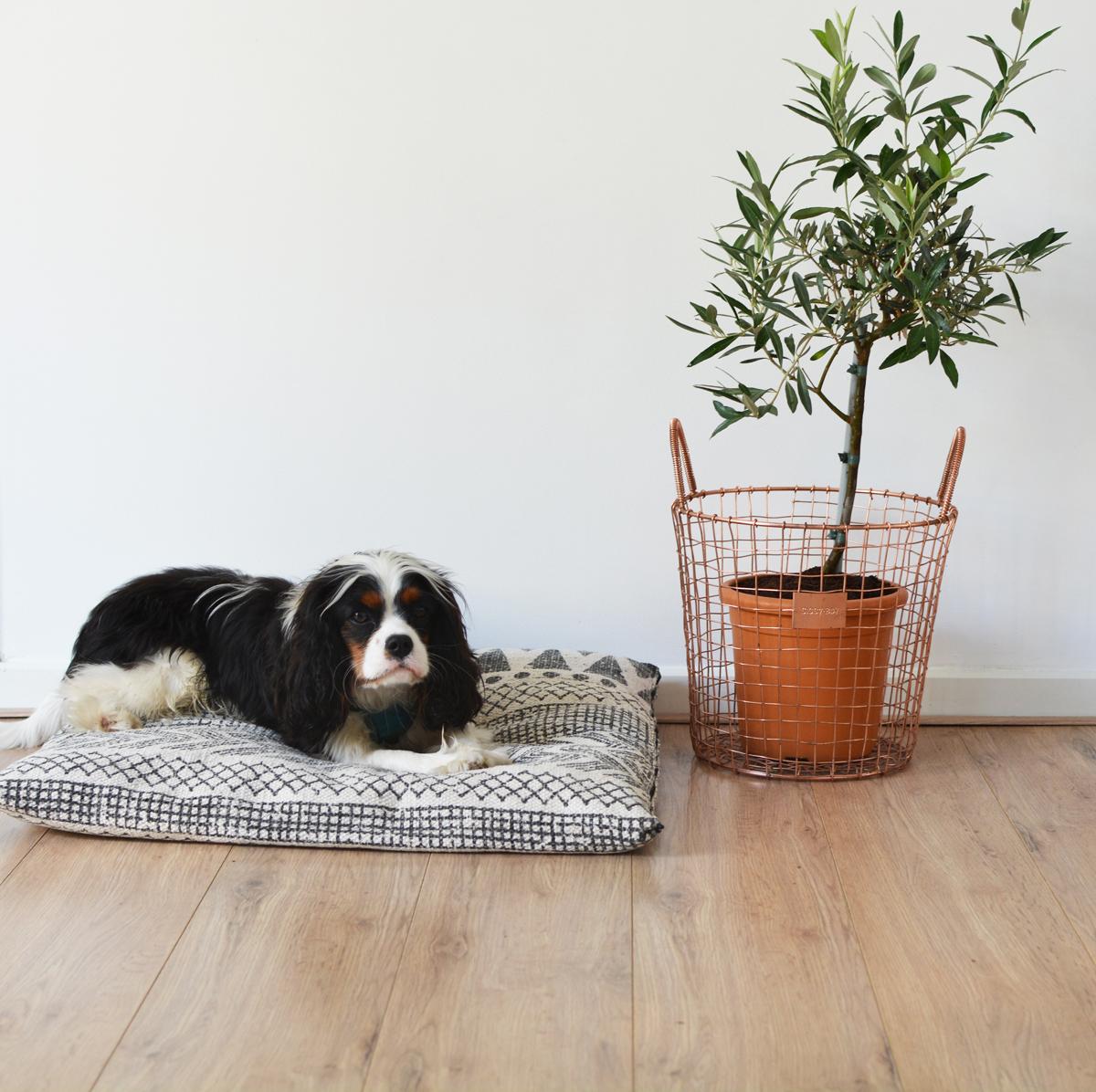 Hondenkussen 2