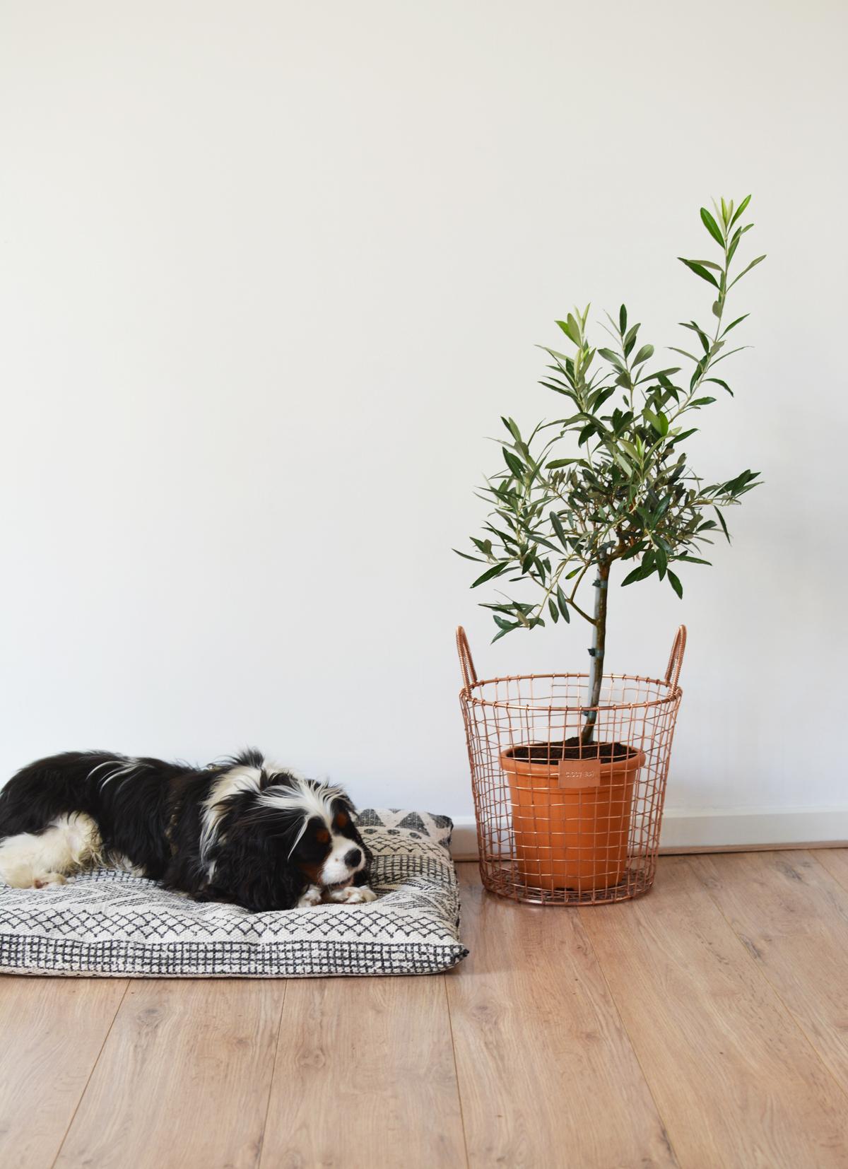 Hondenkussen 3