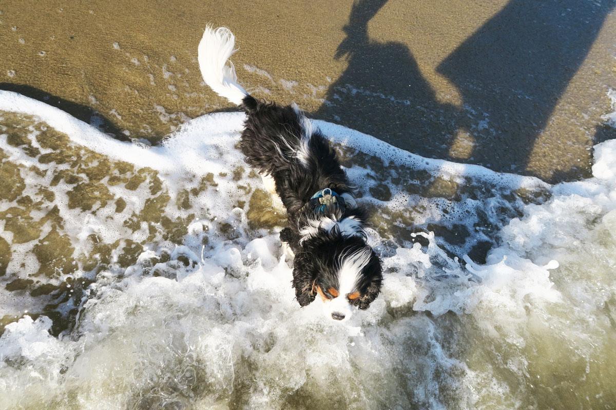 hermie-in-zee