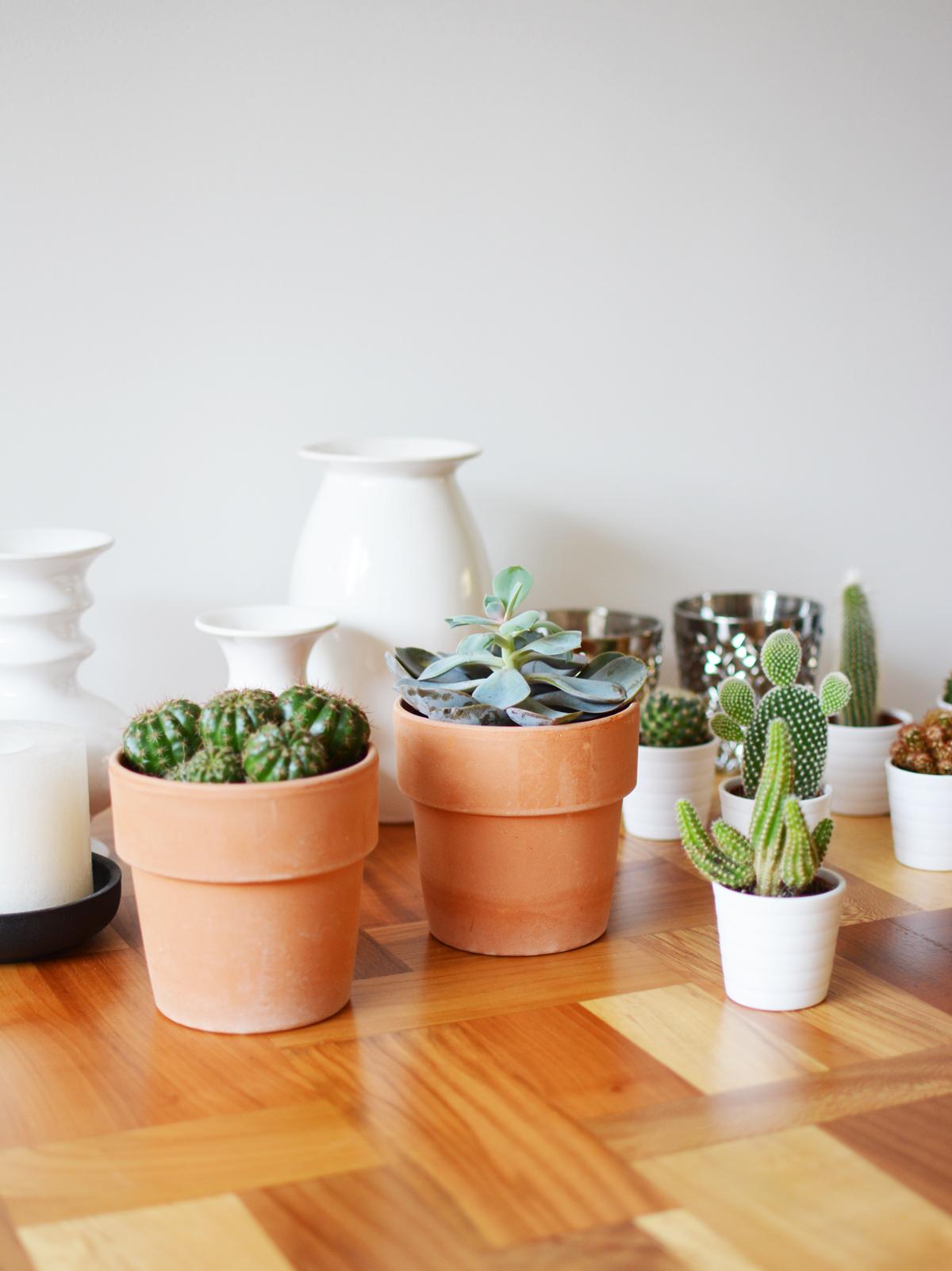 kleine-plantjes