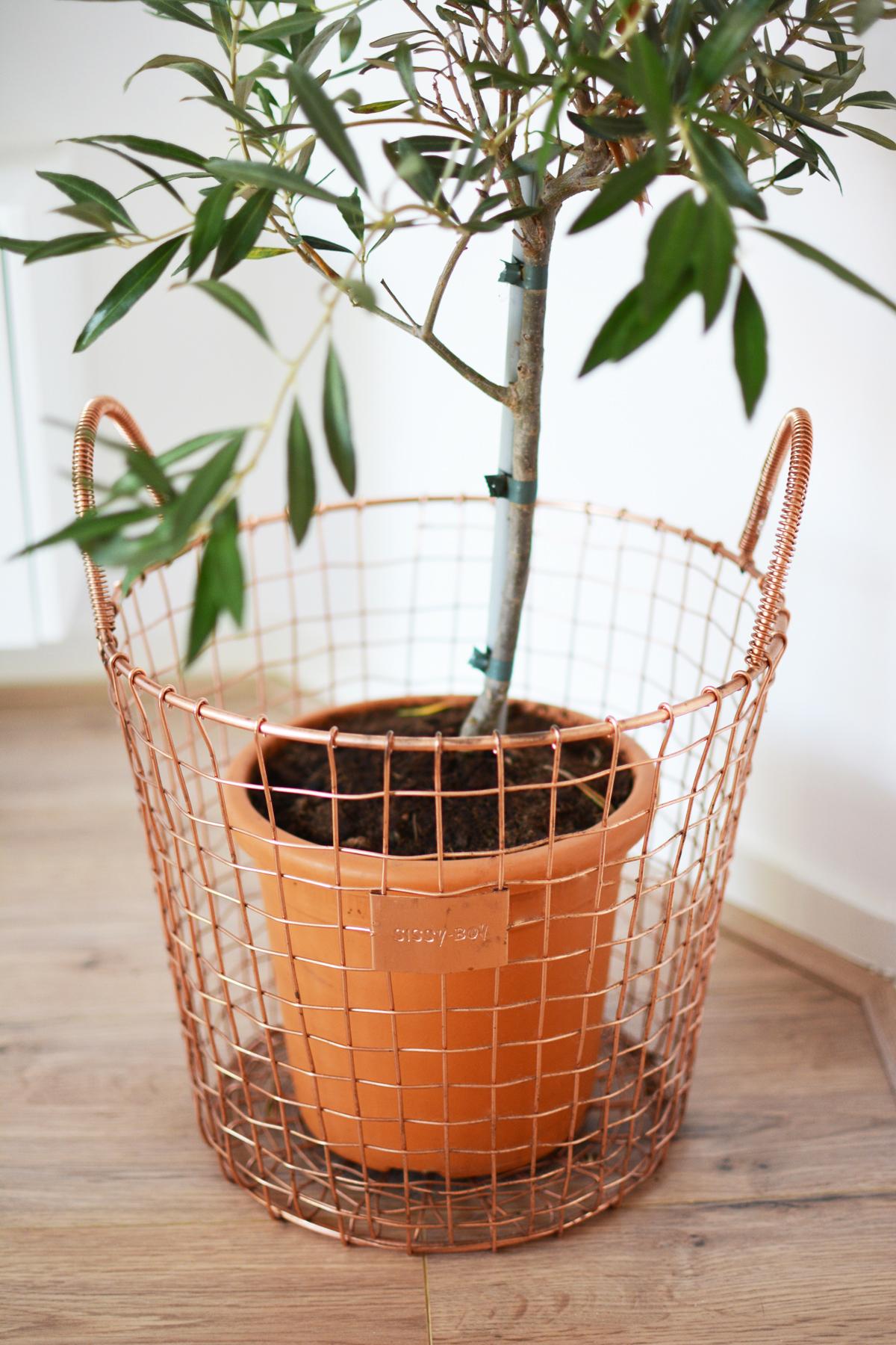olijfboompje-2