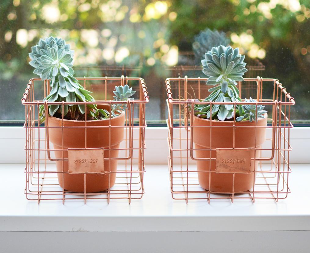 planten-in-vensterbank-2