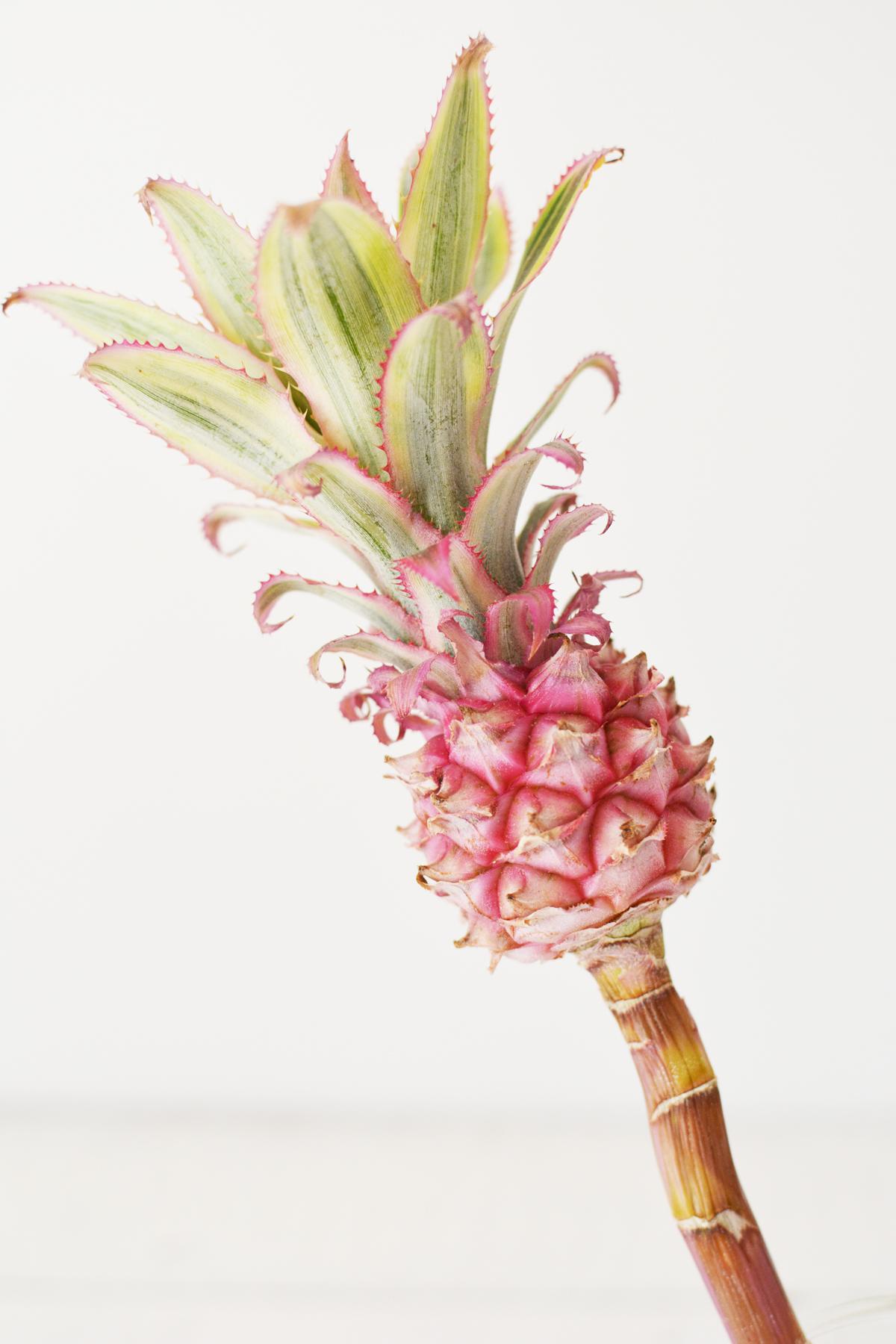 Ananasbloem 13