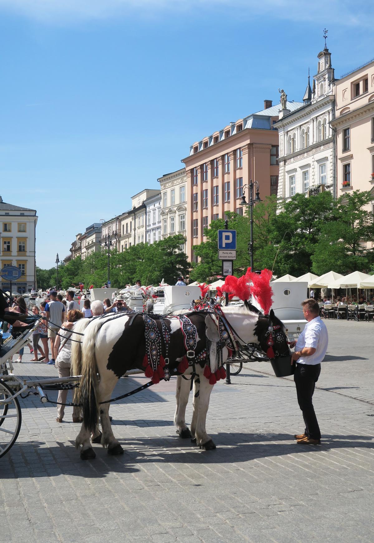Polen 12