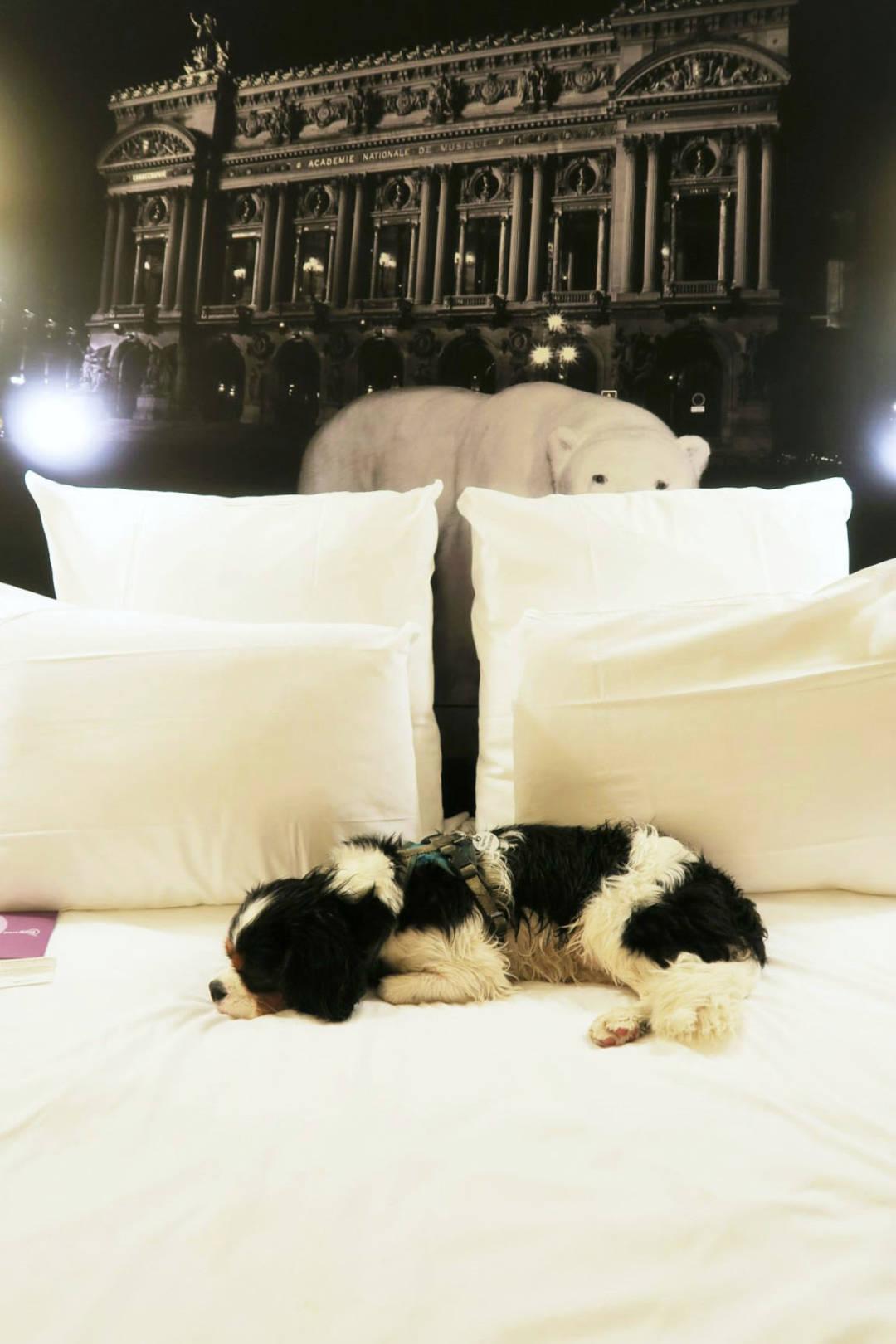 Hermie hotel 3