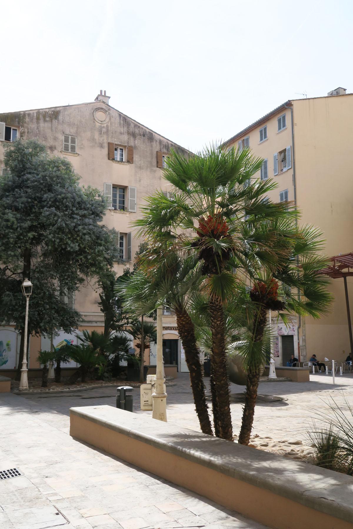 Toulon 75